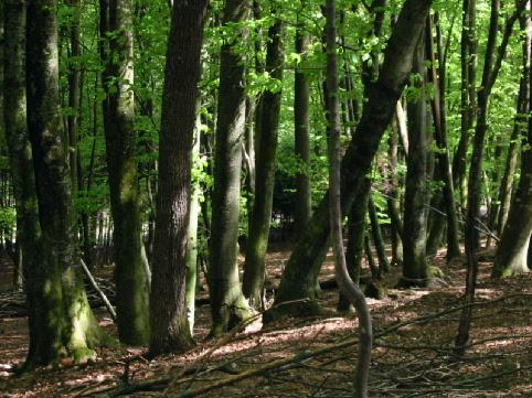 Bosque tropical. Fuente: Wikipedia