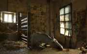 Exposición fotográfica Miradas de Caballo