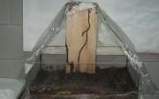 Imagen 1. Investigación de bioindicadores relacionados con colonias de termitas.