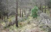 Restos de biomasa forestal alineados tras tratamientos selvícolas. Fuente: elaboración propia (AIDIMA)