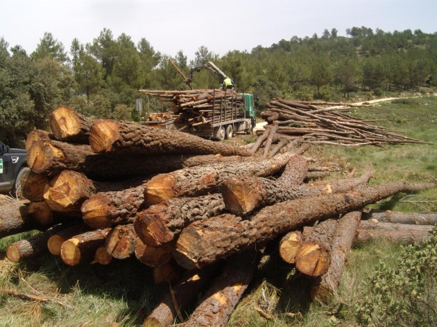 Madera plantaciones sostenibles