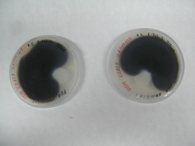 biotest-mohos-nanomagnet-aidima