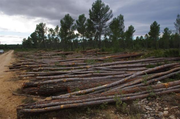 madera-pino-desarrollo-nuevos-productos-woodtech-aidima