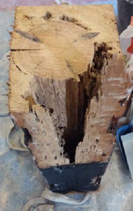 Degradación por termitas de una viga en uno de los casos expuestos