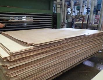 Fabricación de tableros de paulownia