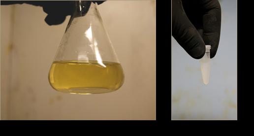 Síntesis de nanopartículas de plata y de dióxido de titanio