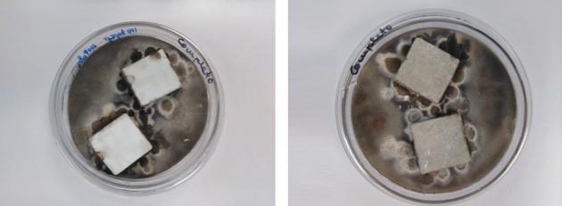 Ejemplo de ensayo de caracterización antimicrobiana frente a hongos de dos sustratos distintos. AIDIMME