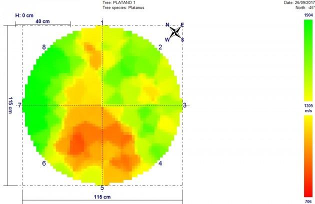 Imagen 2. Ejemplo de aplicación de la técnica de tomografía acústica a un árbol en pie.