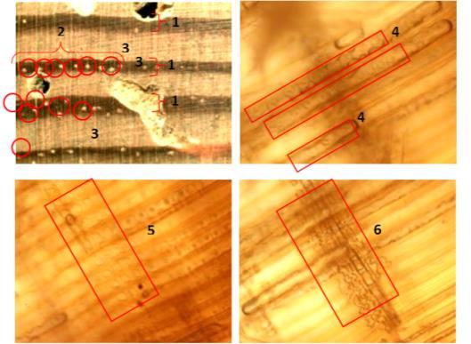 Imagen 1. Fotografías tomadas de los planos transversal, radial y tangencial de una muestra de pino silvestre.